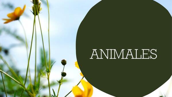 """Vocabulario """"ANIMALES"""""""