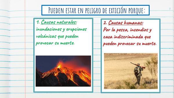 Power Point: Animales nativos de Chile en peligro de extinción